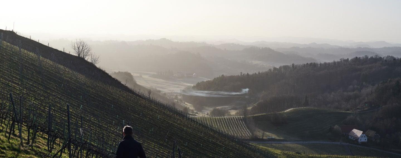 polz-vineyard-banner